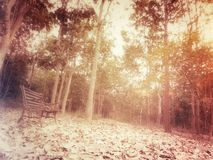 Beauty of autumn forest Stock Image