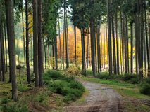 Beauty autumn forest. South Bohemia royalty free stock images
