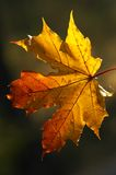 Beauty of autumn forms Royalty Free Stock Image