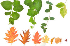 The beauty of autumn leaves. Beauty and colors of the leaves of autumn Stock Photography