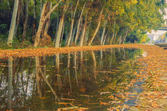 The beauty of the autumn Royalty Free Stock Photography