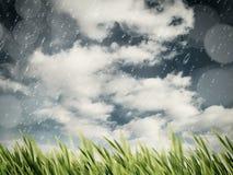 Beauty autumnal rain on the meadow Stock Photos