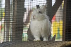 Beauty baby white rabbit Stock Photo