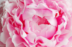 Free Beauty Background Royalty Free Stock Image - 10314176