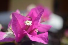 Beauty of bali flowers stock photo
