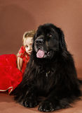 Beauty and the Beast. Girl with big black water-dog. Stock Photos