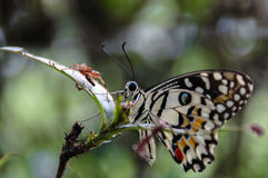 Beauty. Beautiful butterfly perching on a branch Stock Image