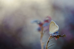 Beauty. A beautiful butterfly shot in the morning with a blurry background Royalty Free Stock Image