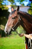 Beauty. Beautiful horse on field Royalty Free Stock Images