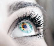 Beauty big eye Stock Image