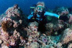 Beauty blonde diver girl looking at you with red sea stars Royalty Free Stock Photo