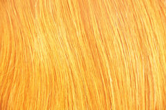 Beauty blonde hair background blonde. Beauty blonde hair background Royalty Free Stock Photos
