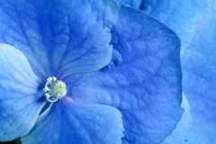 Beauty blue flower Stock Photos