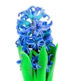 Beauty Blue Hyacinth Royalty Free Stock Photos