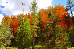 The beauty of Bryce Canyon. Stock Photography