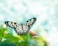 Beauty butterfly on leaf. Small DOF Stock Images
