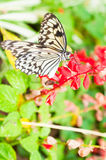 Beauty butterfly on leaf. Royalty Free Stock Photos