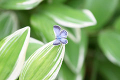 Beauty butterfly on leaf. With  small DOF Royalty Free Stock Photo