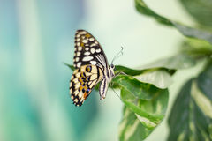 Beauty butterfly in Nature Royalty Free Stock Images