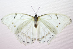 Beauty butterfly in Nature stock photo