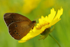Beauty butterfly on a yellow flower Stock Photo