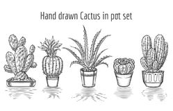 Beauty cacti. Hand drawn cactus in pot set Stock Image