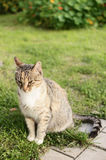 Beauty cat. Cat on the countryside way Stock Image