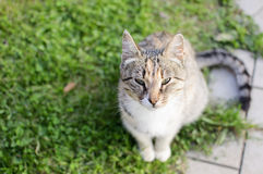 Beauty cat. Cat on the countryside way Royalty Free Stock Photography