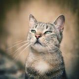 Beauty cat Stock Image