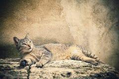 Beauty cat Royalty Free Stock Photography