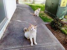Beauty Cats stock image