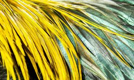 Colorful feathers background. The beauty of chicken feathers.background stock photography