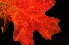 Beauty of a Colorful Autumn Leaf Royalty Free Stock Photos