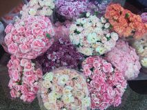 Beauty of colorful flowers Royalty Free Stock Images