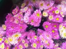 Beauty of colorful flowers Royalty Free Stock Photos