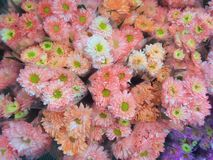 Beauty of colorful flowers Stock Photography