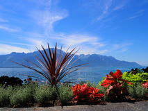 Beauty colorful flowers on promenade in MONTREUX city at Lake Geneva in SWITZERLAND. With panoramic view on swiss alpine mountains range and clear blue sky in Royalty Free Stock Images