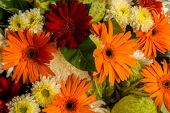 The beauty of colorful gerbera flowers in summer. Royalty Free Stock Photo