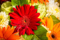The beauty of colorful gerbera flowers in summer. Royalty Free Stock Photography