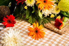 The beauty of colorful gerbera flowers in summer. Stock Photos