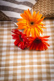 The beauty of colorful gerbera flowers in summer. Stock Image