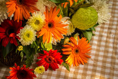 The beauty of colorful gerbera flowers in summer. Stock Images