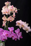 Beauty colorful orchid flowers. Isolated on black background Stock Images