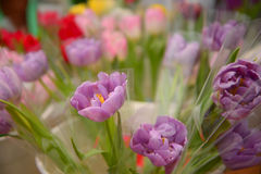 Beauty colorful tulip in pot of flower shop, Selective focus Royalty Free Stock Photos