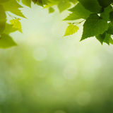 Beauty colors of the spring nature Stock Photography
