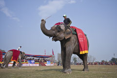 Beauty contest - Elephant festival, Chitwan 2013, Nepal Royalty Free Stock Images