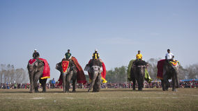 Beauty contest - Elephant festival, Chitwan 2013, Nepal Royalty Free Stock Photo