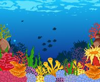 Beauty corals with underwater view background Royalty Free Stock Images