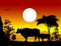 Beauty cow silhouettes with landscape background Royalty Free Stock Photos