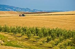Beauty of cultivated land Stock Images